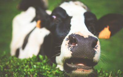 GRANT OPPORTUNITY:  Dairy Farming Business Grant